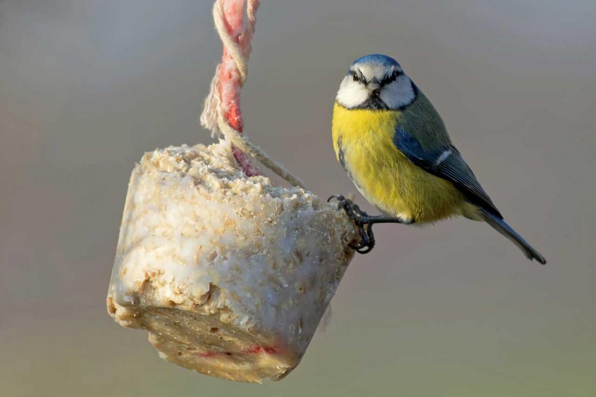 Mit Kindern eine Futterstation für Vögel basteln