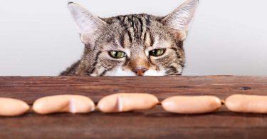 Abrotanum für Katzen bei Abmagerung und Schwäche