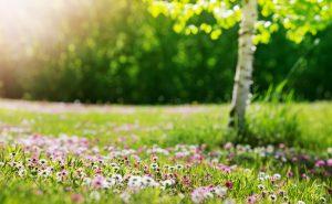 Ihre Rede im Frühling: Nutzen Sie die Top Ten der besten Zitate