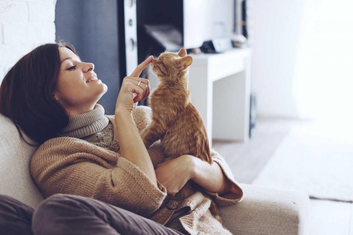 Stressabbau durch den Umgang mit Katzen
