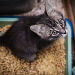 Katzen mit Wurmbefall mit homöopathischen Mitteln behandeln
