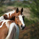 Kotwasser beim Pferd: Wie Sie Durchfall homöopathisch behandeln