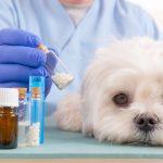 Symptome in der Homöopathie beim Hund zur Auswahl einsetzen