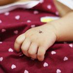 Wie kann ich mein Baby vor Mücken schützen?