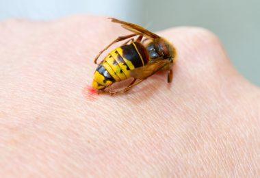 Insektenstiche und Verletzungen durch Quallen homöopathisch behandeln
