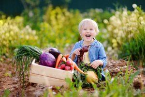 Produktive Gartenwirtschaft - so werden Sie zum Selbstversorger