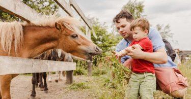 Familienausflüge mit Zweijährigen: So hat die ganze Familie Spaß