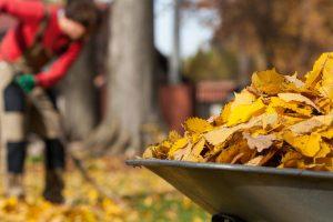Herbstlaub kehren muss nicht Pflicht des Vermieters sein