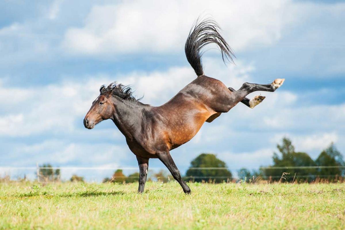 Wie Sie Gallen beim Pferd mit Schüßlersalzen behandeln
