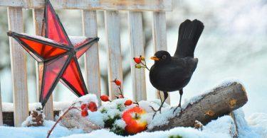 Nutzen Sie diese Tipps, um Ihren Garten winterfest zu machen
