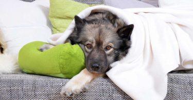 Wie Sie Schnupfen bei Katzen und Hunden mit Schüßlersalzen behandeln