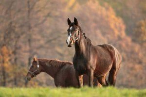 Stärken Sie das Immunsystem Ihres Pferdes mit Schüßlersalzen