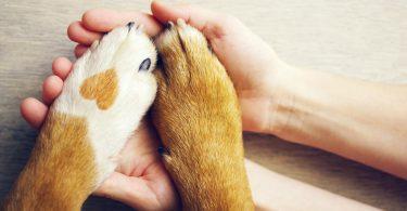 Herzkrankheiten beim Hund homöopathisch unterstützen