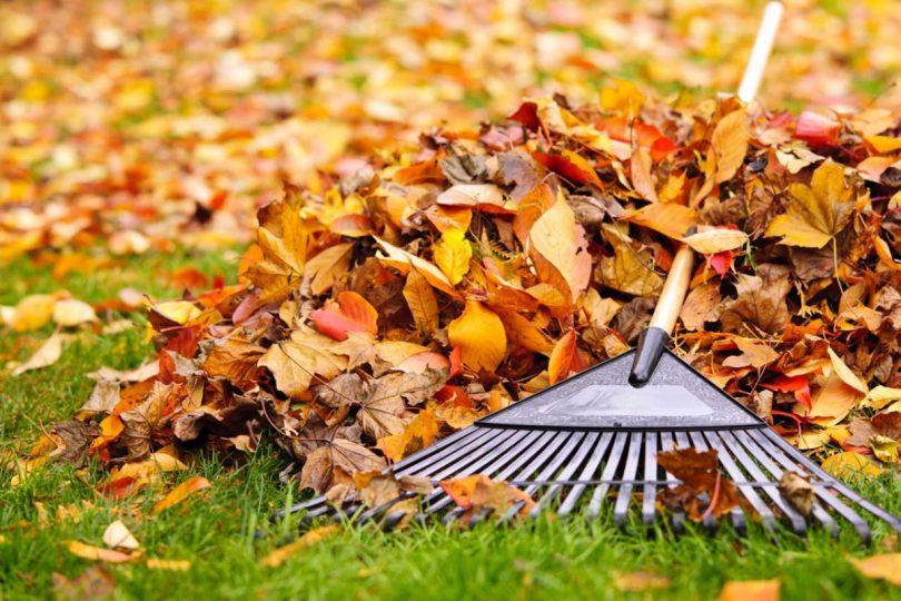 Herbstlaub: Das sind Ihre Pflichten als Wohnungseigentümer