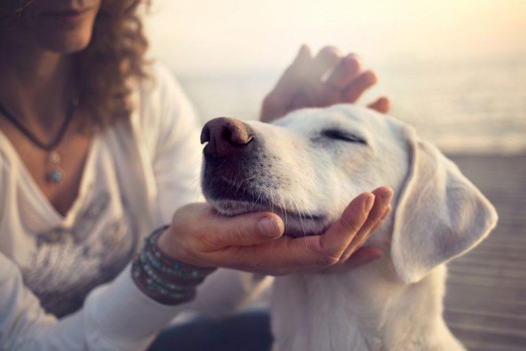 Stärken Sie das Immunsystems Ihres Hundes durch Homöopathie