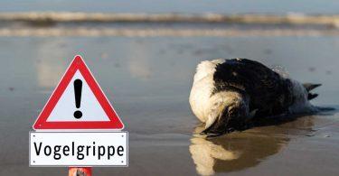 Vogelgrippe – ist sie für Menschen gefährlich?