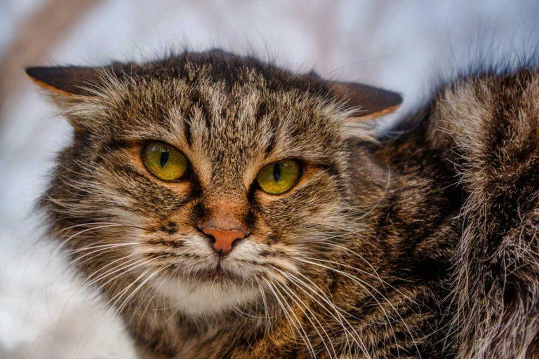 Homöopathie für Katzen: So nutzen Sie Lachesis