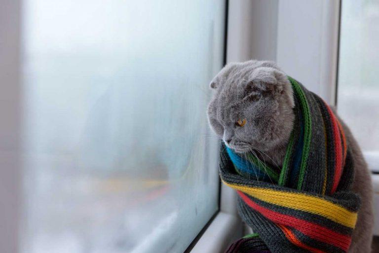 So behandeln Sie Halsschmerzen oder Rachenentzündung bei Katzen homöopathisch