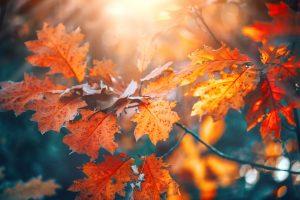 Fotografieren im Herbstlicht