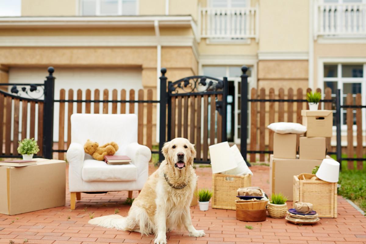So planen Sie einen stressfreien Umzug für Ihr Haustier