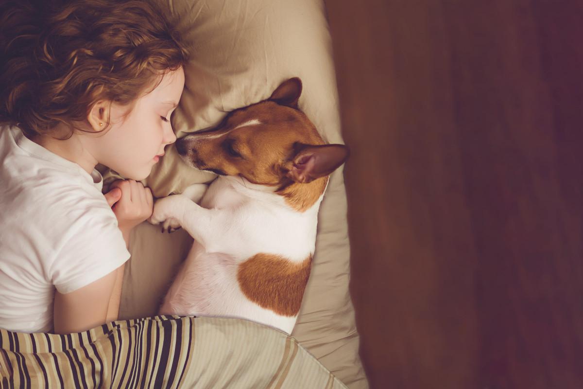 Mein Kind möchte ein Haustier: Woran muss man vorher denken?