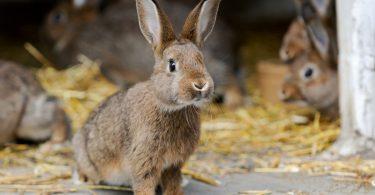 Nutzen Sie Homöopathie für Durchfall beim Kaninchen