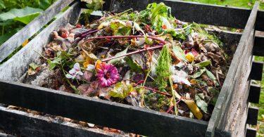 Alles, was Sie über Kompost wissen sollten