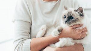 Homöopathie für Katzen – Besserung von Symptomen durch Wärme und Kälte
