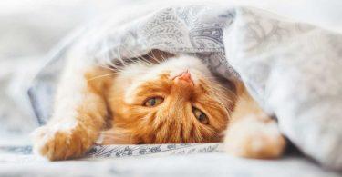 Blähungen oder Flatulenz bei der Katze homöopathisch behandeln