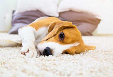 Langeweile beim Alleinbleiben: Diese Tipps bereiten Ihrem Hund Freude