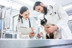 So wenden Sie homöopathische Mittel bei Katzen an