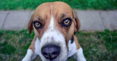 Wie Sie Ihrem Hund das Anspringen abgewöhnen