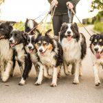 Mit diesen 6 einfachen Regeln funktioniert Ihr Patchwork-Hundehaushalt
