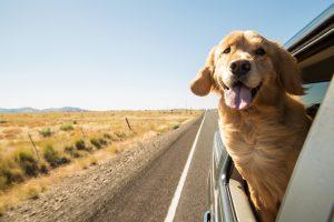 So reisen Sie entspannt mit Ihrem Hund