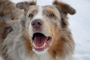 So gewöhnen Sie Ihrem Hund unerwünschtes Bellen ab