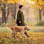 Telefonieren beim Hundespaziergang: Muss das sein?