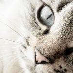 Allergien bei der Katze homöopathisch behandeln