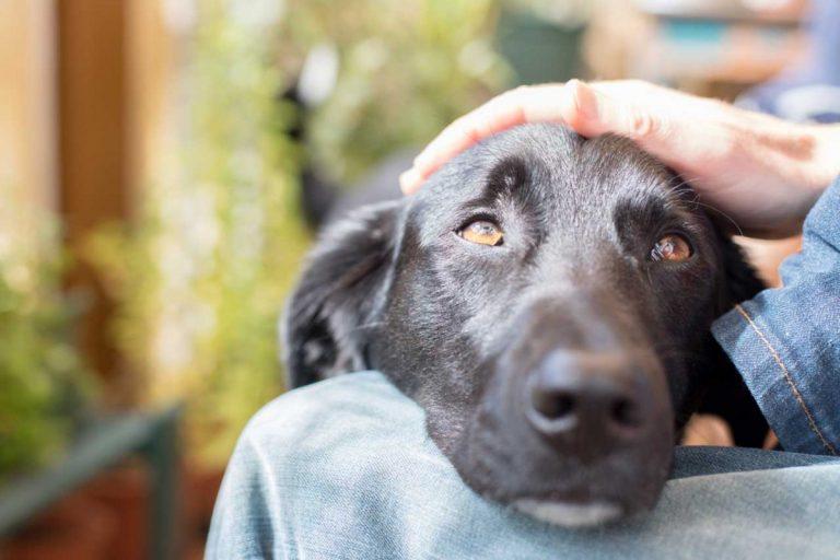 Warum Ihr Hund als Belohnung lieber gestreichelt wird