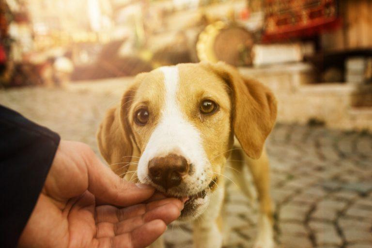Leckerchen nicht gefunden: Hat Ihr Hund Augenprobleme?