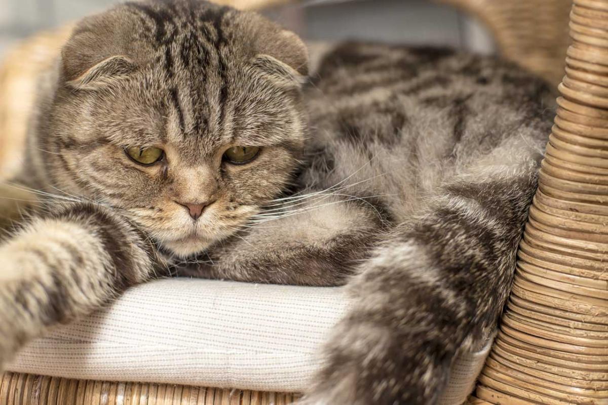 Homöopathie gegen Depressionen bei der Katze