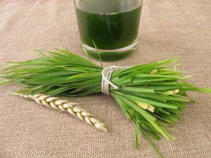 Gesund mit Weizengras: Die 10 Wirkungsweisen des Superfoods