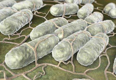 11 Tipps, wie Sie eine Salmonellen-Infektion vermeiden