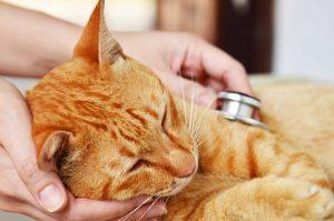 Nierenschwäche bei Katzen erkennen: Die 7 häufigsten Symptome