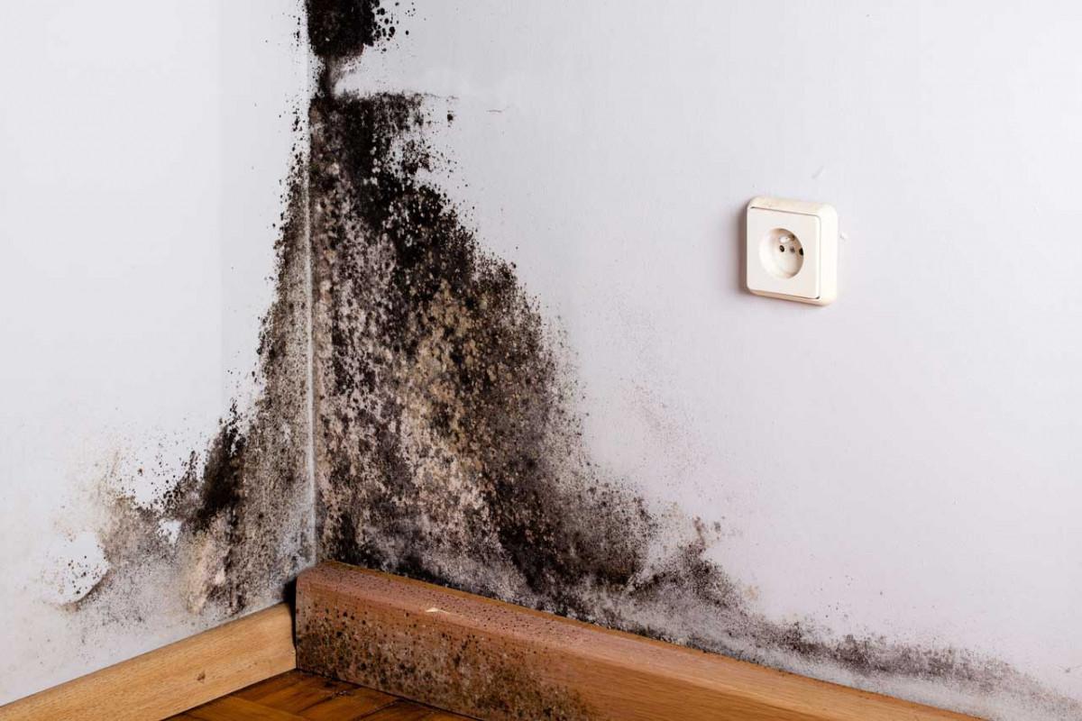 4 anzeichen an denen sie schimmel erkennen. Black Bedroom Furniture Sets. Home Design Ideas