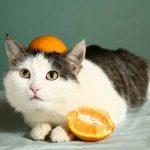 3 Faktoren, die eine Übersäuerung bei Hund und Katze begünstigen