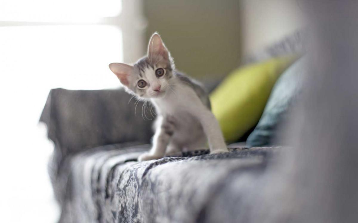 Veratrum album für Katzen bei Aufregung und Schwäche