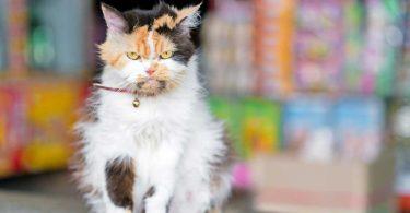 Stramonium für aggressive und ängstliche Katzen