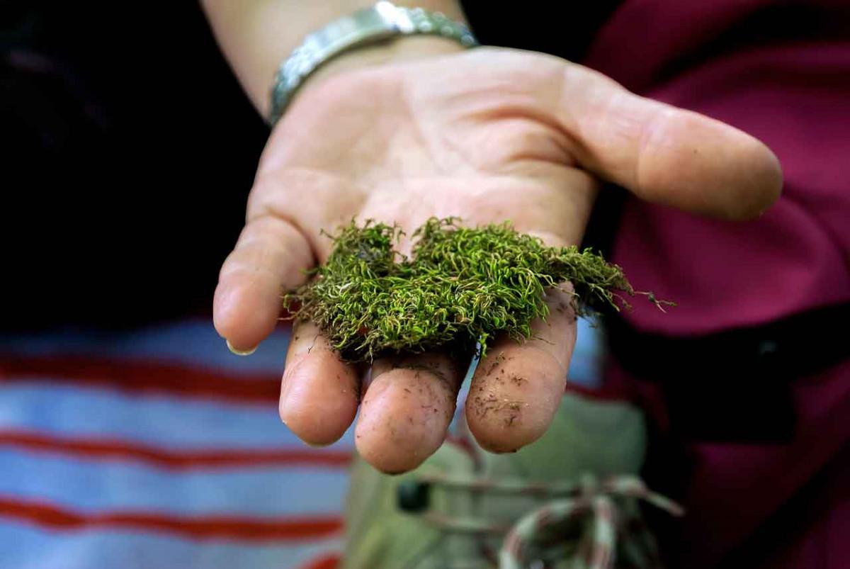 Moos im Rasen: 5 wirkungsvolle Mittel zur Bekämpfung