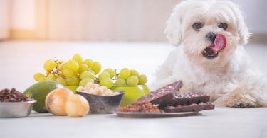 Bitte nicht füttern: 10 giftige Lebensmittel für Ihren Hund