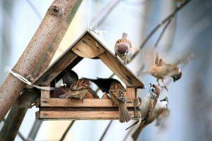 7 Tipps, wie Sie im Winter mit Kindern Vögel richtig füttern